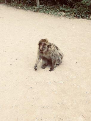 monkey edited
