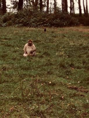 monkey edited2